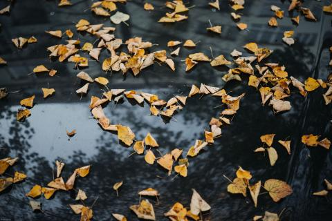 leaves in the shape of a heart